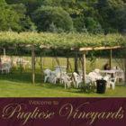 Sunday Jun 10th Pugliese Vineyards 1-5pm